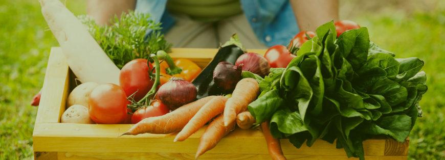 Rubrica orto e giardino | Settembre